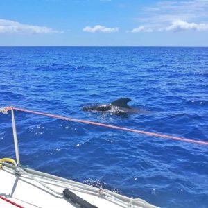 programok - Delfin és bálna néző hajókirándulás