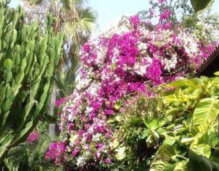 Tenerife színes virágai