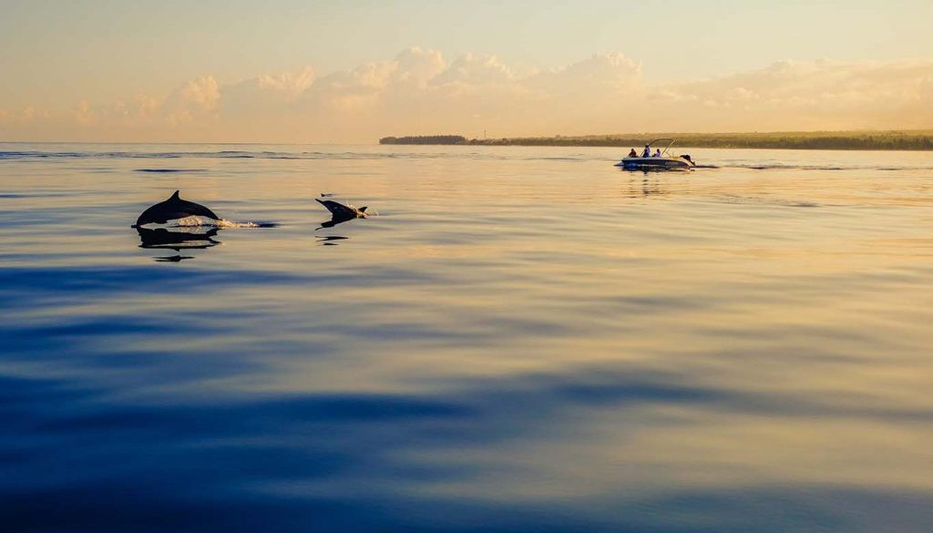 Delfin és bálna néző hajókirándulás